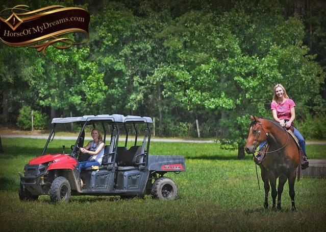 029-Sheldon-Bay-AQHA-Gelding-horse-For-Sale