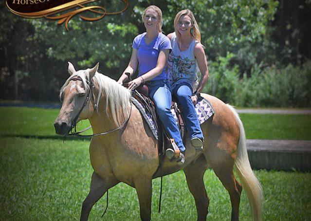 030-Big-Vegas-Palomino-Quarter-Horse-Gelding-For-Sale