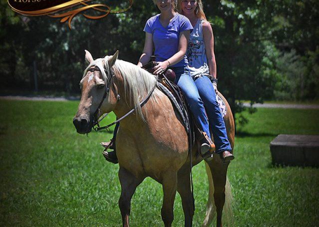 031-Big-Vegas-Palomino-Quarter-Horse-Gelding-For-Sale