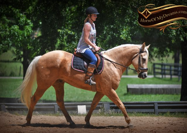 032-Big-Vegas-Palomino-Quarter-Horse-Gelding-For-Sale