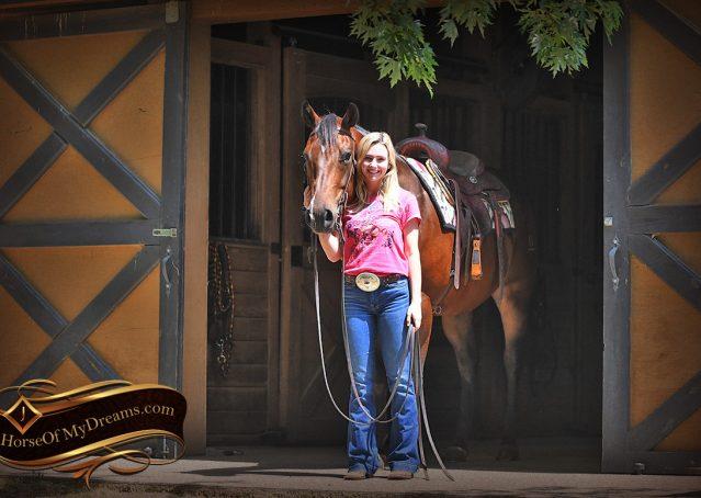 033-Sheldon-Bay-AQHA-Gelding-horse-For-Sale