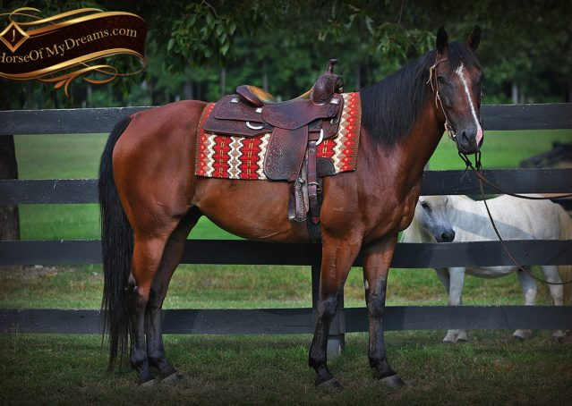 001-Doc-Bay-Quarter-Horse-Gelding-For-Sale