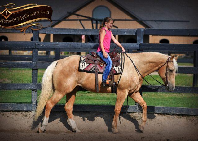 002-Cord-Palomino-AQHA-gelding-for-sale