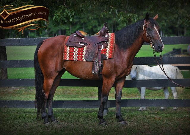 002-Doc-Bay-Quarter-Horse-Gelding-For-Sale