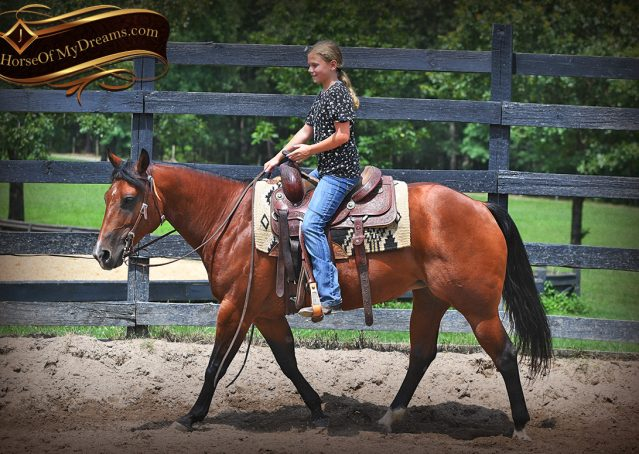 002-Lena-Bay=AQHA-Playgun-Mare-For-Sale