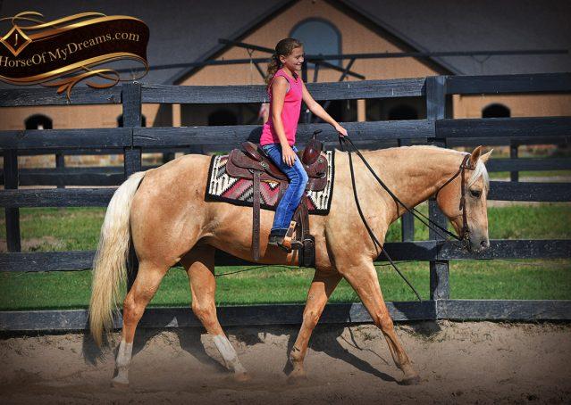 003-Cord-Palomino-AQHA-gelding-for-sale