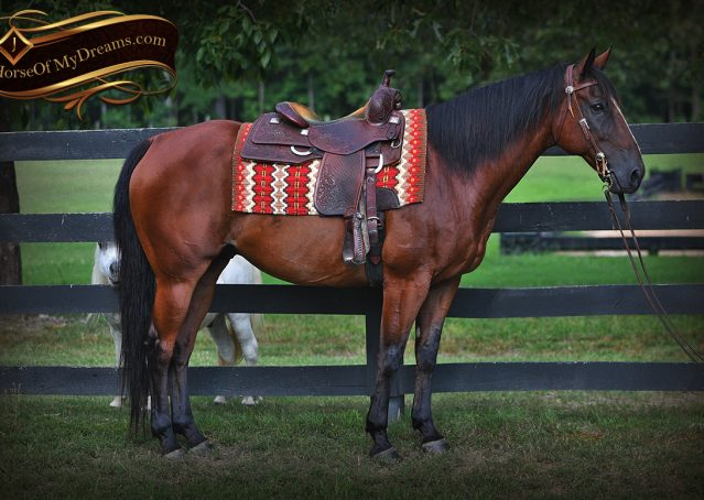 003-Doc-Bay-Quarter-Horse-Gelding-For-Sale