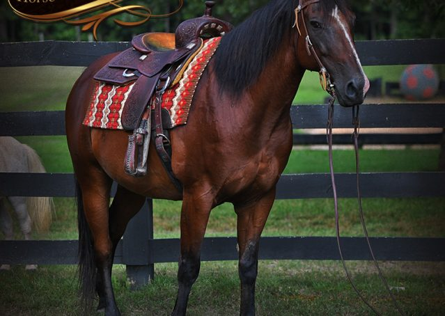 004-Doc-Bay-Quarter-Horse-Gelding-For-Sale