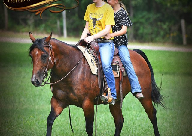 005-Lena-Bay=AQHA-Playgun-Mare-For-Sale