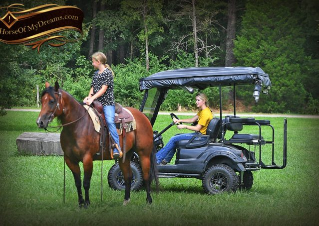 006-Lena-Bay=AQHA-Playgun-Mare-For-Sale
