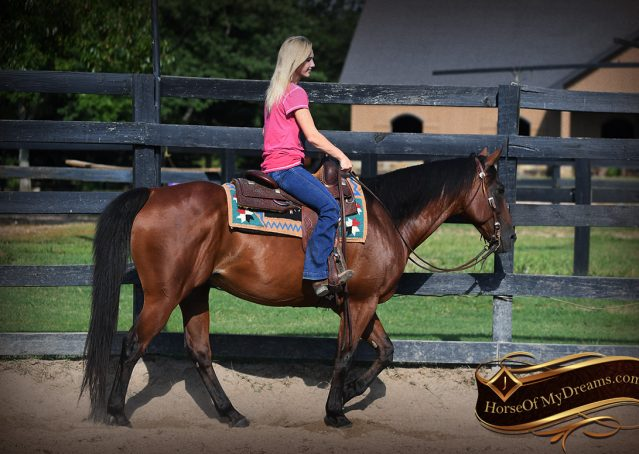 007-Doc-Bay-Quarter-Horse-Gelding-For-Sale