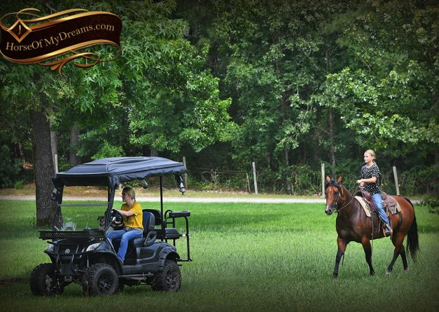007-Lena-Bay=AQHA-Playgun-Mare-For-Sale