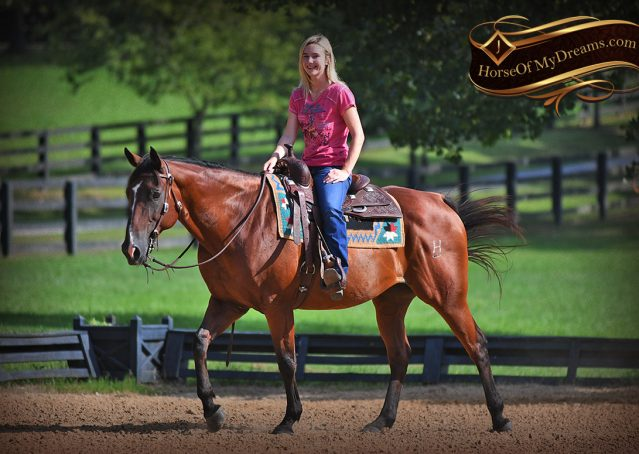 008-Doc-Bay-Quarter-Horse-Gelding-For-Sale