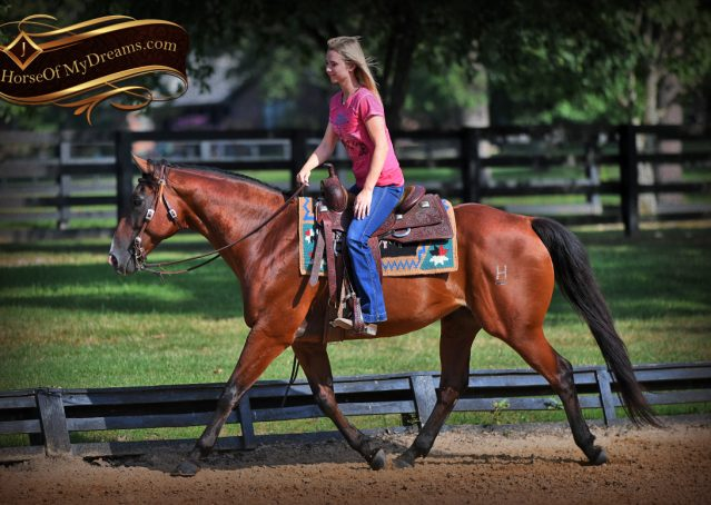 009-Doc-Bay-Quarter-Horse-Gelding-For-Sale