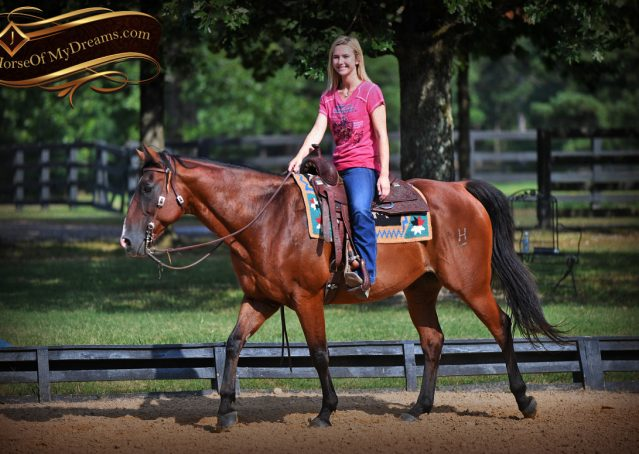 010-Doc-Bay-Quarter-Horse-Gelding-For-Sale