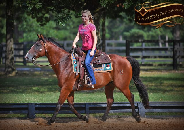 011-Doc-Bay-Quarter-Horse-Gelding-For-Sale