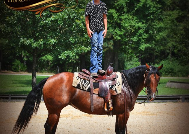 012-Lena-Bay=AQHA-Playgun-Mare-For-Sale
