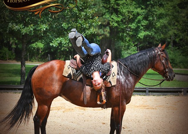 013-Lena-Bay=AQHA-Playgun-Mare-For-Sale