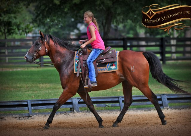 014-Doc-Bay-Quarter-Horse-Gelding-For-Sale