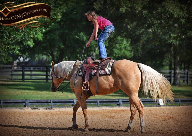 015-Cord-Palomino-AQHA-gelding-for-sale