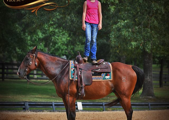 015-Doc-Bay-Quarter-Horse-Gelding-For-Sale