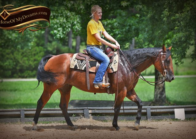 016-Lena-Bay=AQHA-Playgun-Mare-For-Sale