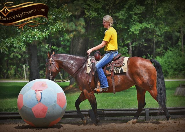 017-Lena-Bay=AQHA-Playgun-Mare-For-Sale