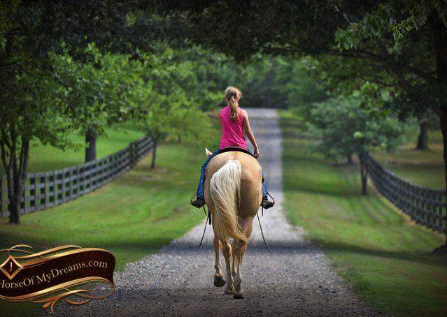 018-Cord-Palomino-AQHA-gelding-for-sale