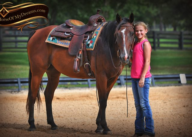 018-Doc-Bay-Quarter-Horse-Gelding-For-Sale