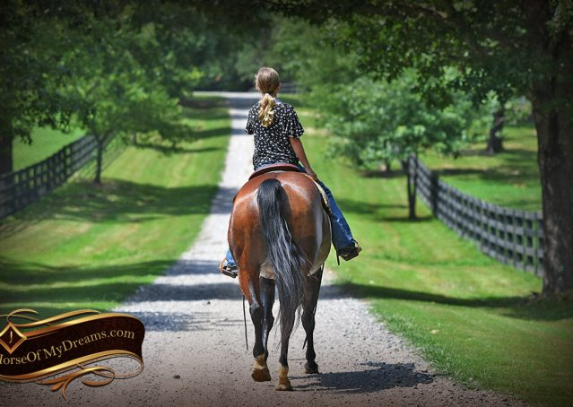 018-Lena-Bay=AQHA-Playgun-Mare-For-Sale
