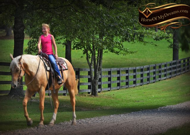 019-Cord-Palomino-AQHA-gelding-for-sale