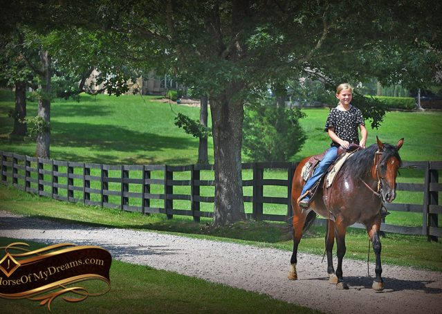 019-Lena-Bay=AQHA-Playgun-Mare-For-Sale