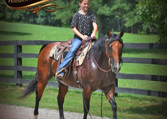 020-Lena-Bay=AQHA-Playgun-Mare-For-Sale