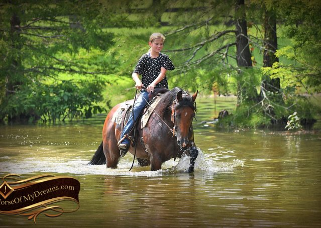 021-Lena-Bay=AQHA-Playgun-Mare-For-Sale