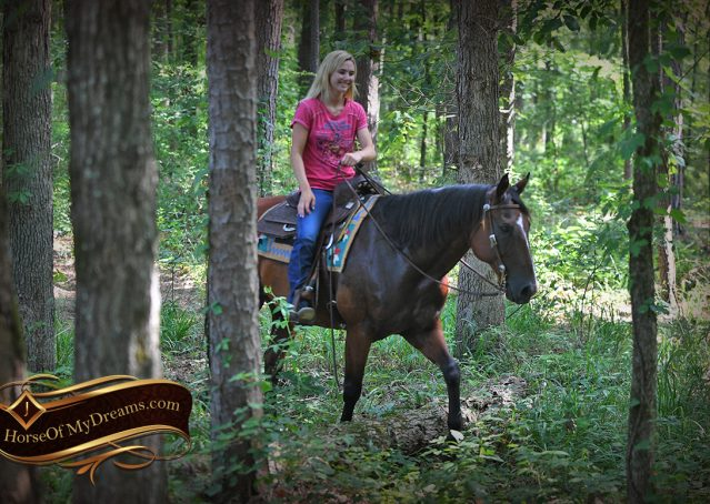 023-Doc-Bay-Quarter-Horse-Gelding-For-Sale