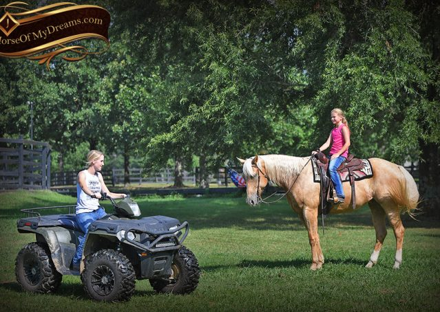 024-Cord-Palomino-AQHA-gelding-for-sale