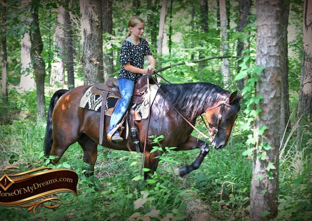 024-Lena-Bay=AQHA-Playgun-Mare-For-Sale