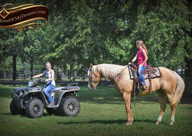 025-Cord-Palomino-AQHA-gelding-for-sale
