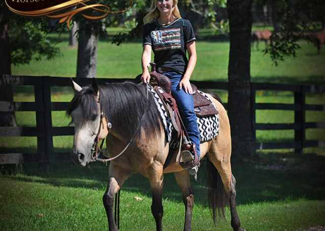 025-Ranger-Buckskin-Quarter-Horse-Gelding-For-Sale