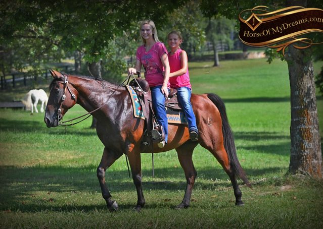 026-Doc-Bay-Quarter-Horse-Gelding-For-Sale