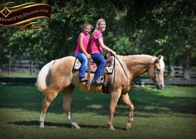 027-Cord-Palomino-AQHA-gelding-for-sale