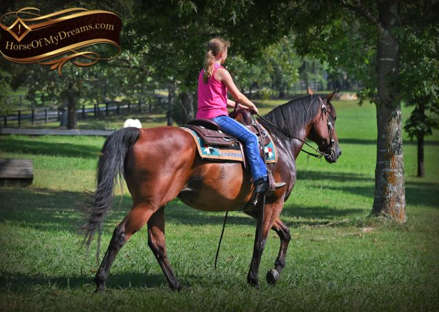 027-Doc-Bay-Quarter-Horse-Gelding-For-Sale