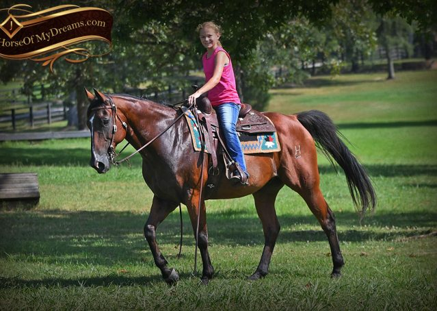 028-Doc-Bay-Quarter-Horse-Gelding-For-Sale