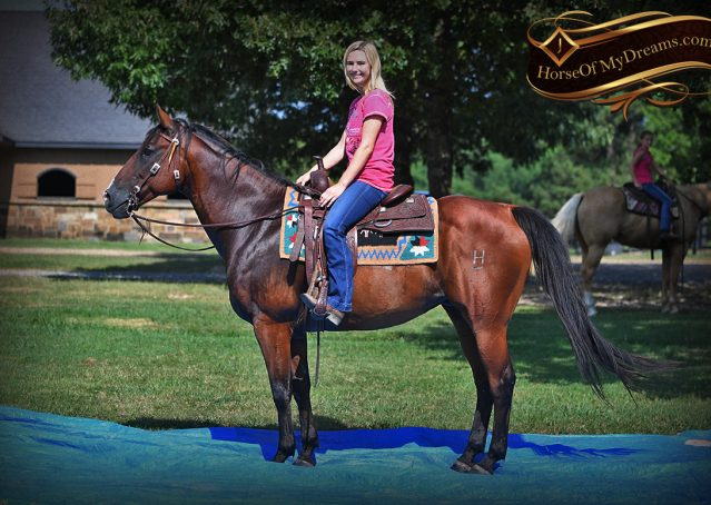 029-Doc-Bay-Quarter-Horse-Gelding-For-Sale