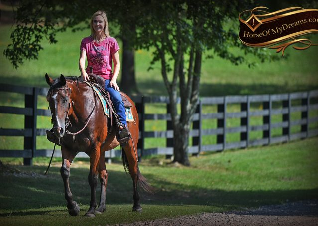 031-Doc-Bay-Quarter-Horse-Gelding-For-Sale