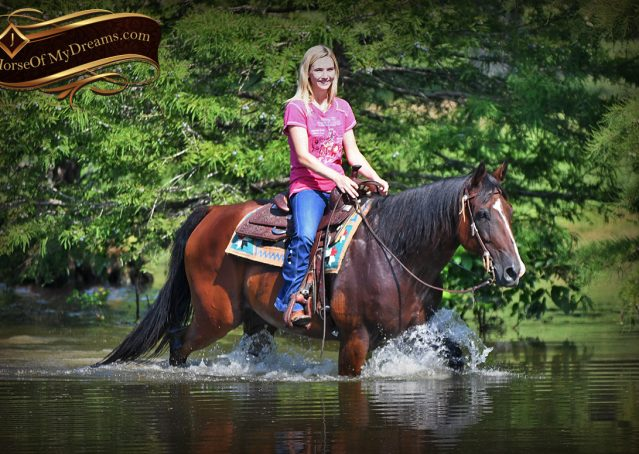 034-Doc-Bay-Quarter-Horse-Gelding-For-Sale