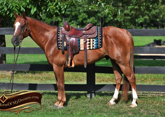 001-Beau-Sorrel-AQHA-Gelding-For-Sale