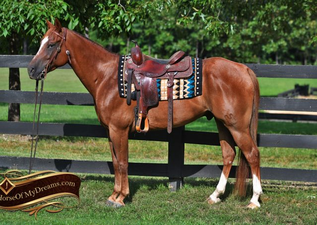 002-Beau-Sorrel-AQHA-Gelding-For-Sale