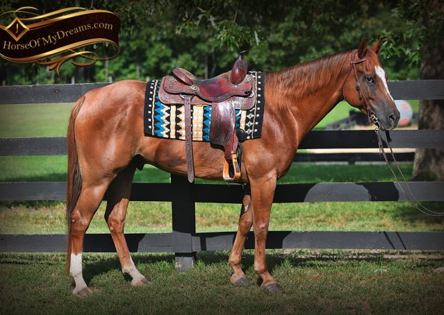 003-Beau-Sorrel-AQHA-Gelding-For-Sale