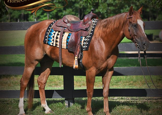 004-Beau-Sorrel-AQHA-Gelding-For-Sale